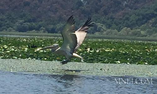 Экскурсия с гидом на Скадарское озеро
