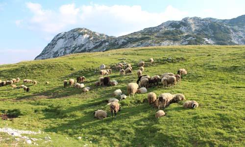 Индивидуальная экскурсия на каньоны Русский гид в Черногории