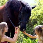 конная прогулка в Черногории экскурсии в черногории гид в будве гид в черногории